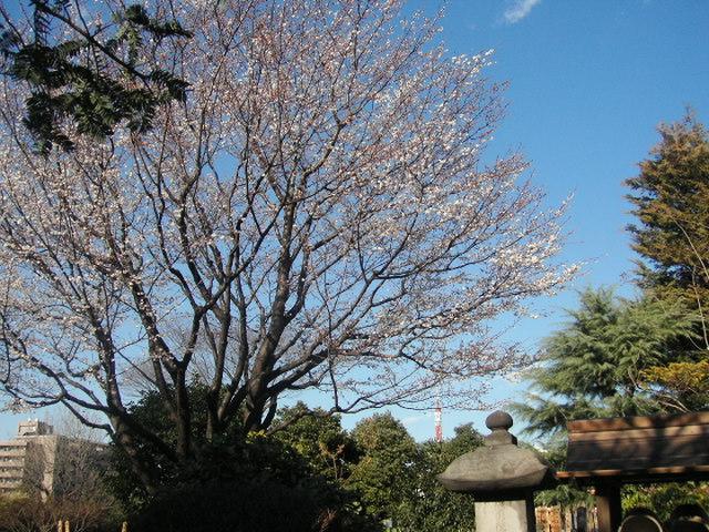 2月の桜・実相寺.JPG